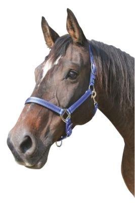 Halfter Mustang, Gr. 2 2fach verstellbar, royalblau/schwarz