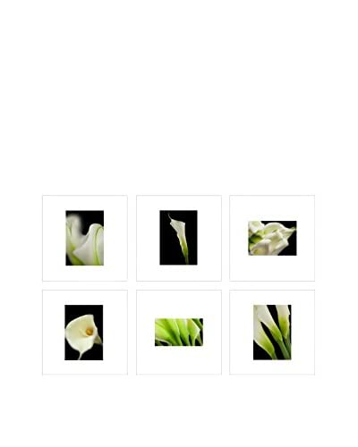 Art Addiction Close Up Floral Collage Black Background Set of 6, Multi, 15.75 x 15.75