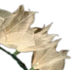 white-leaf-flower-strings-party-lights-from-real-bodhi-tree-leaves-35-set