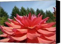BIG DAHLIA FLOWER Blooming Summer Floral Art Prints Baslee Troutman Canvas Print / Canvas Art - A...