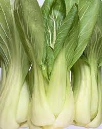 Canton PAK CHOI Bok Choy Chinese Cabbage 15 Seeds