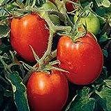 Roma Tomato 300 Seeds - GARDEN FRESH PACK!
