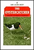 The Oystercatcher (Shire natural history)