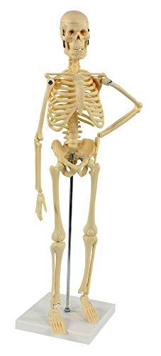 s241212-skelett-modell-klein-45cm