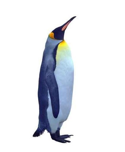 Animal Wall Decals Isolated Emperor Penguin Over White - 36 Inches X 30 Inches - Peel And Stick Removable Graphic front-673786