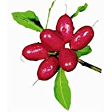 Fresh Miracle Fruit - Turns Sour to Sweet - 15 Fruit