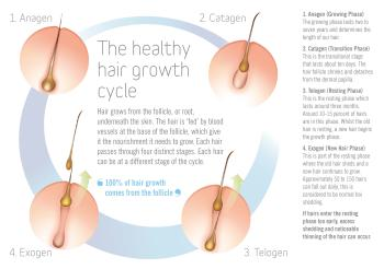 The Healthy Hair Growth Cycle