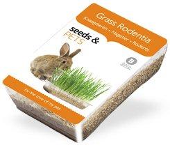 kit-de-cultivo-hierbas-para-roedores