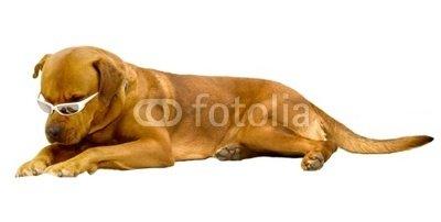 GUARD DOG SUNGLASSES : DOG SUNGLASSES - ANON CRUSHER ...
