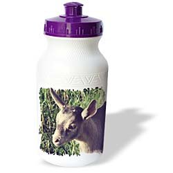 Cassie Peters Photography - Dairy Goat Billy Kid Photographed by Angelandspot - Water Bottles