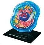 Famemaster 4D-Science Animal Cell Ana...