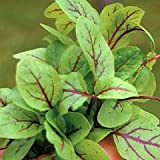 Salad Leaves - Sorrel Blood veined