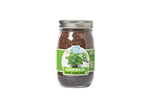 back-to-the-roots-garden-in-a-jar-mint