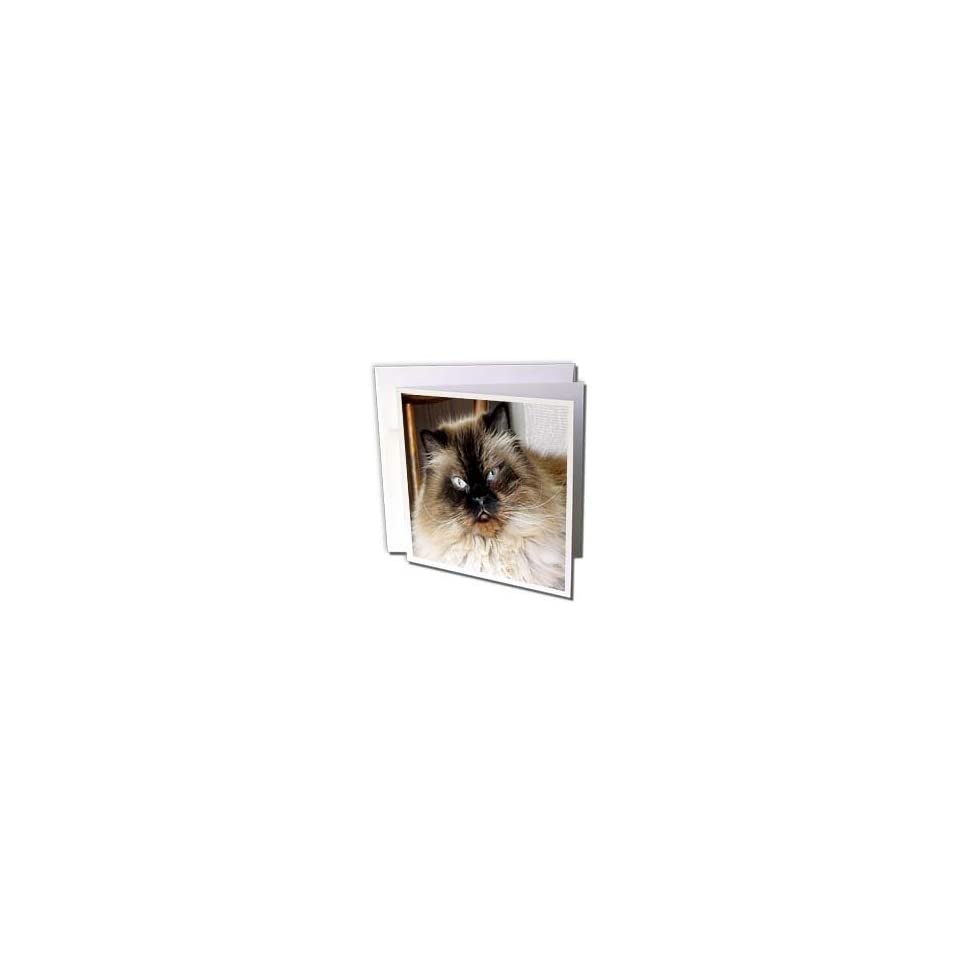 WhiteOak Photography Cats   Siamese cat on Chair   Greeting Cards 6