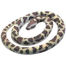 rubber-rock-python
