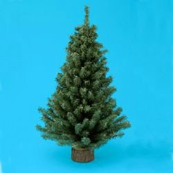 #!Cheap MINIATURE PINE TREE