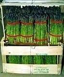 David's Garden Seeds Asparagus Jersey Gem DGS30089A (Green) 25 Hybrid Seeds