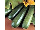 Courgette Parthenon F1 Seeds by T and M