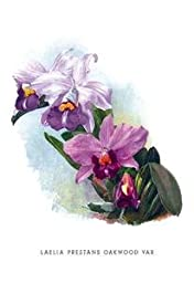 30 x 20 Stretched Canvas Poster Laelia Prestans Oakwood Var
