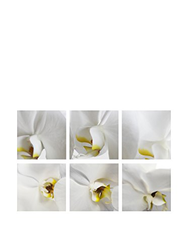 Art Addiction Orchid Close Up Collage Set of 6, Multi, 15.75