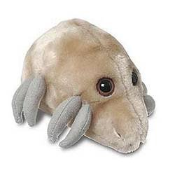 Giant Microbes Dust Mite Dermatophagoides Pteronyssinus Science Kit
