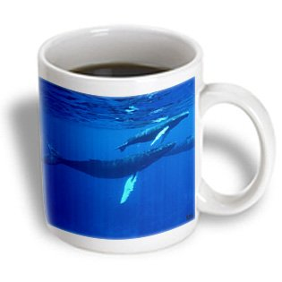 Mug_10692_1 Kike Calvo Whales N Dolphins - North Atlantic Humpback Whales Migrate South To The Silver Banks To Breed And Have Their Calves - Mugs - 11Oz Mug
