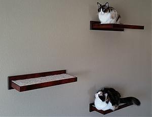 Amazoncom Wooden Cat Perch Shelf Floating Wall Mount