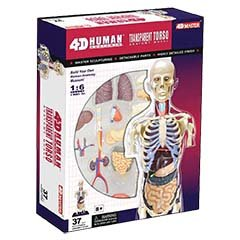 4D Master Transparent Human Anatomy Torso Model Kit, One Color (The Human Body Model compare prices)