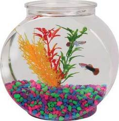 Tom Aquatics 1/2 Gallon Flat-Sided Plastic Fish Bowl