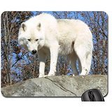 White Wolf on a Rock looking Down Mouse Pad, Mousepad