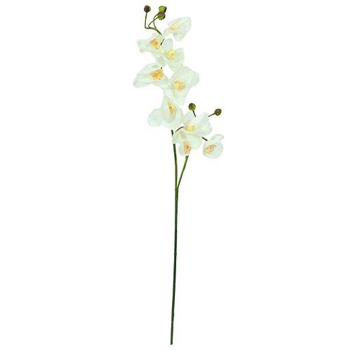 euro-palms-82530323-orquideas-ramas-100-cm-crema-blanco