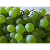 White Seedless Grape Vines - White Grapes-Vines - 2 yr Old Healthy Bare Root Plants - 3 pack (Color: White)