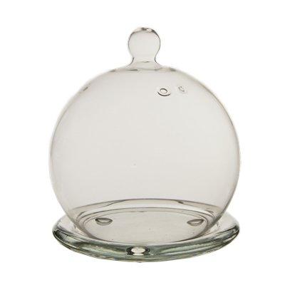 CYS® Mini Glass Display/Cloche Dome with Base, Plant Terrarium. (1 Pc) (Small Glass Base compare prices)