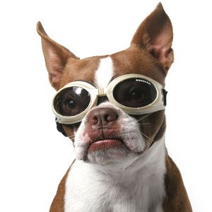 Dog Sunglasses - Silver, Medium