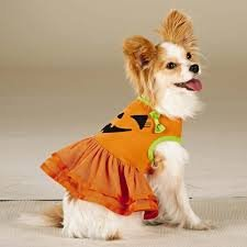 Pumpkin Costume for Dog