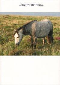 Pferd Bild Karte Geburtstag