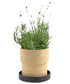 Urban Flower Lavender Bamboo Grow Pot