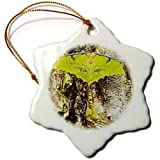 Silk moth insect, Sammamish Washington - US48 DGU0252 - Darrell Gulin - 3 Inch Snowflake Porcelain Ornament