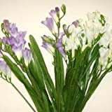 Artificial / Silk Flowers – 12 Stem Freesia Bush in Cream