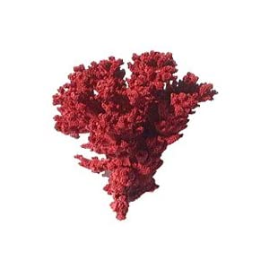 Worldwide Imports Painted Coral Red 5-7""