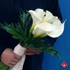 Classic White Calla Lily Toss Bouquet