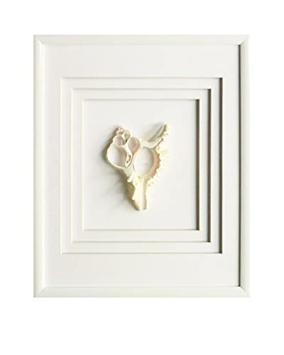 Star Creations Murex Shell Shadowbox