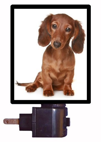 Dog Night Light - Long Haired Dachshund Puppy Led Night Light front-1036432