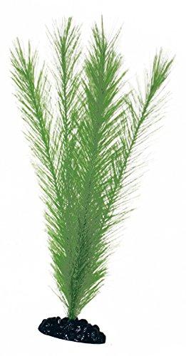wave-blyxa-plante-classique-pour-aquariophilie-taille-m
