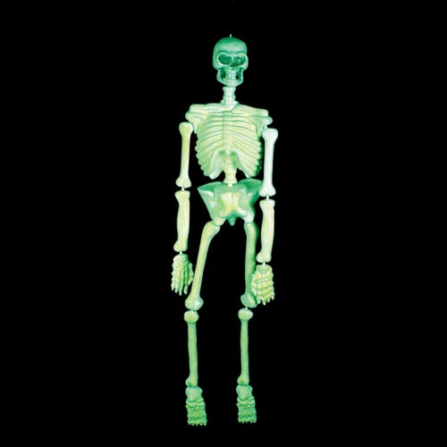 Life Size Glow In The Dark Skeleton