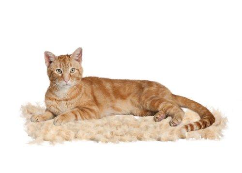 furminator fellpflege f r kleine katzen mit kurzen haaren. Black Bedroom Furniture Sets. Home Design Ideas