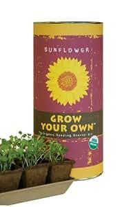 Grow Your Own Sunflower