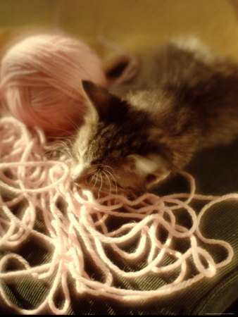 Kitten Curled Up with Ball of Yarn as It Sleeps