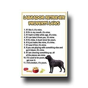 Amazon.com: Labrador Retriever Property Laws Fridge Magnet (Black