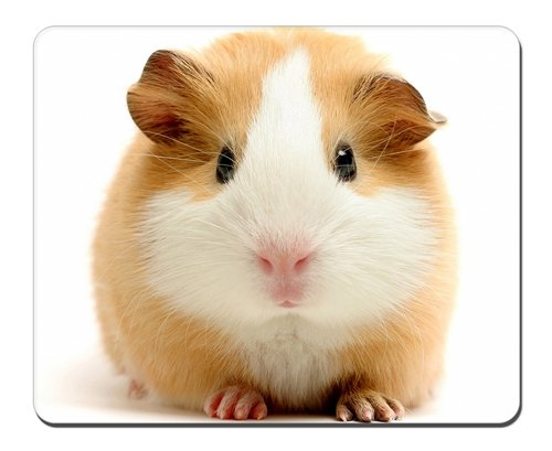cute guinea pig Mousepad,Gaming Mouse Pad (10.2x8.2 inches)